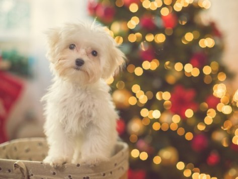 Tips for Pet Parents for Dealing With Holiday Stress