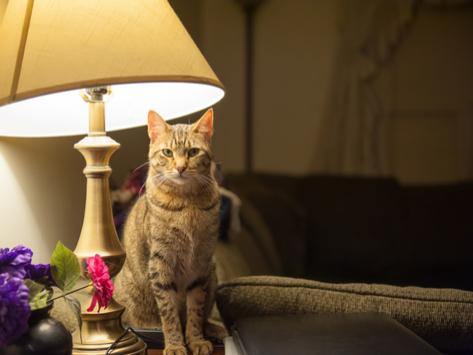 Treating the Cat That Won't Sleep at Night