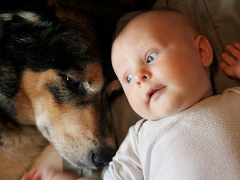 What Not to Do with Dogs and Babies