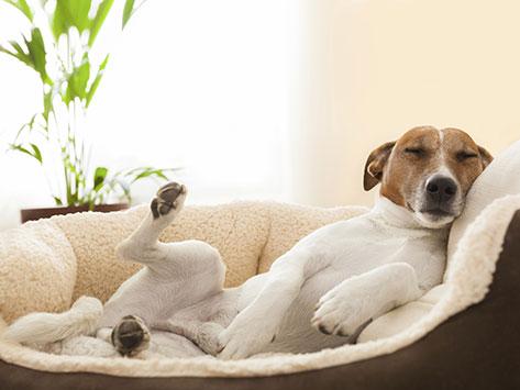 Why Do Dogs Sleep Like That?