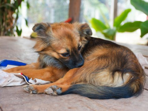 5 Signs You (and Your Pet) Have Fleas and Don't Know It