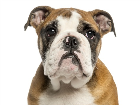 5 Flea and Tick Treatments That Don't Work