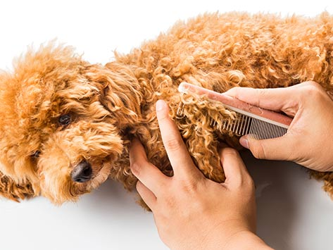 Dog's Hair in Knots? How to Get Them Untangled and Under Control