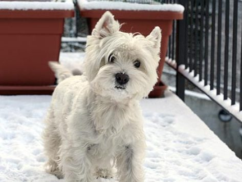 Caring for Your Pet's Skin During the Winter Season
