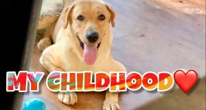 Mr.Brayan | Funny Dog | Labrador Puppy