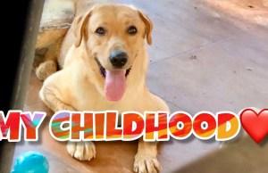 Mr.Brayan   Funny Dog   Labrador Puppy