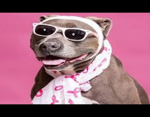 funny dog vid