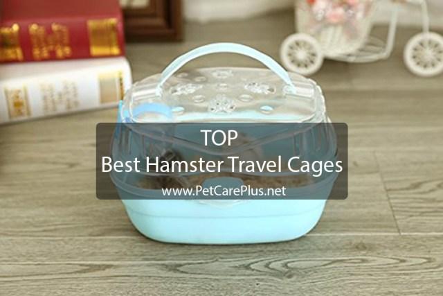 10 Best Hamster Travel Cages - Pet Care Plus