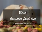 Top 25 Best Hamster Foods in 2020