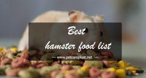 Top 25 Best Hamster Foods in 2020