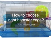 How to choose right hamster cage?