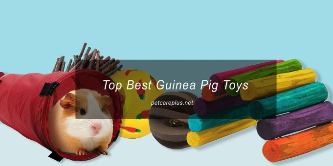 Top Best Guinea Pig Toys