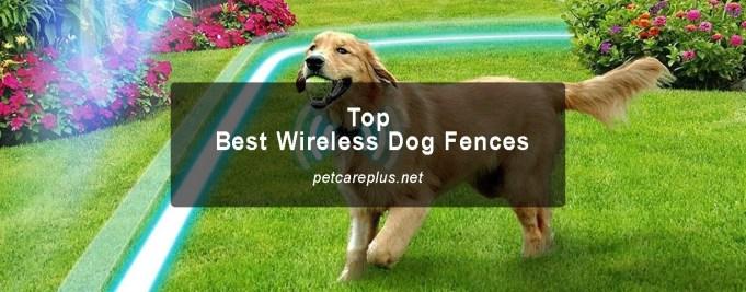 Top Best Wireless Dog Fences