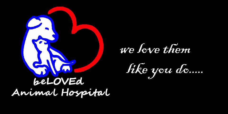 Beloved Animal Hospital.jpg