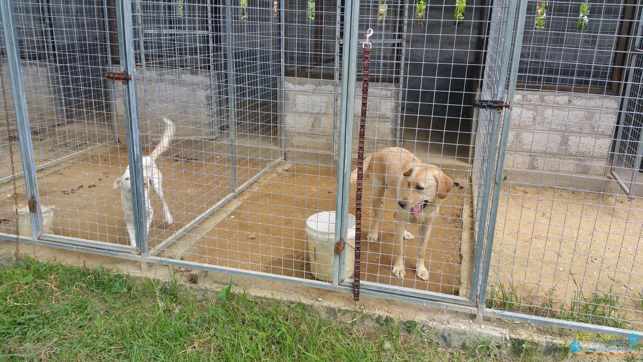 Companion Canines2.jpg