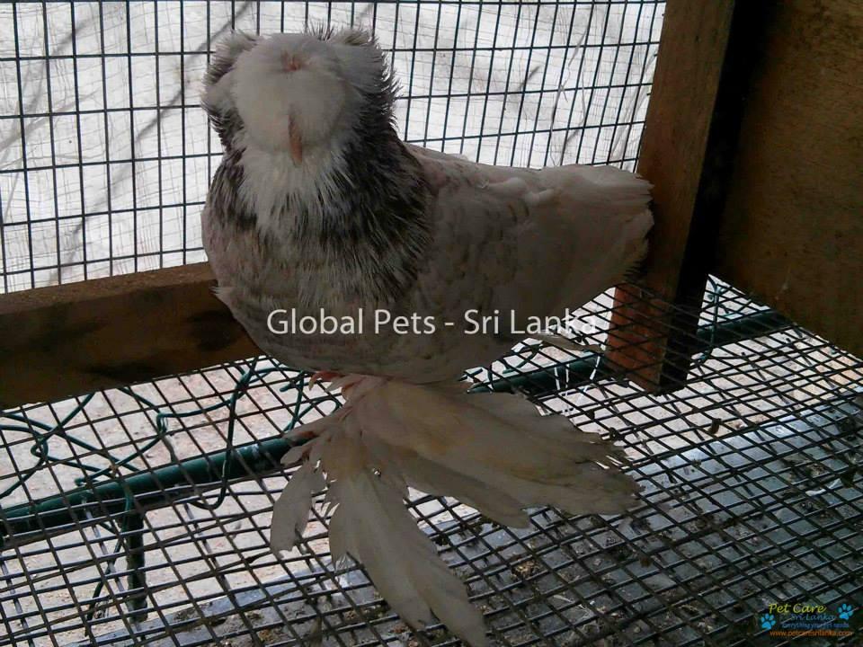 Global Pets4.jpg
