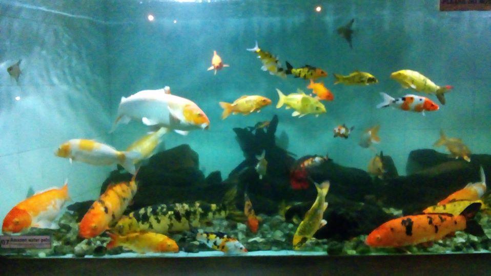 Indusiri aquarium2.jpg