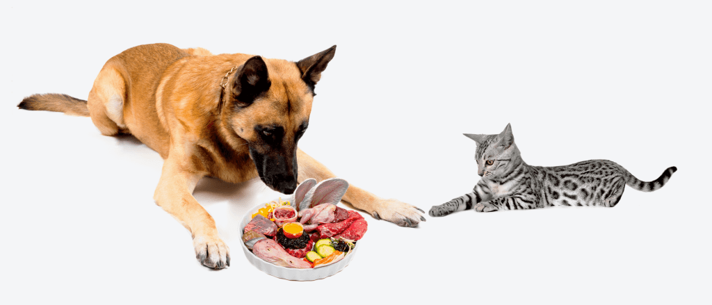 PetCater Dog and Cat with Raw food