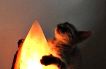 Watch This Zen Kitty Absorb the Healing Powers of a Salt Lamp