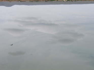 Greater Portmore Sewage Ponds, a year ago...and beneath the surface... (My photo)
