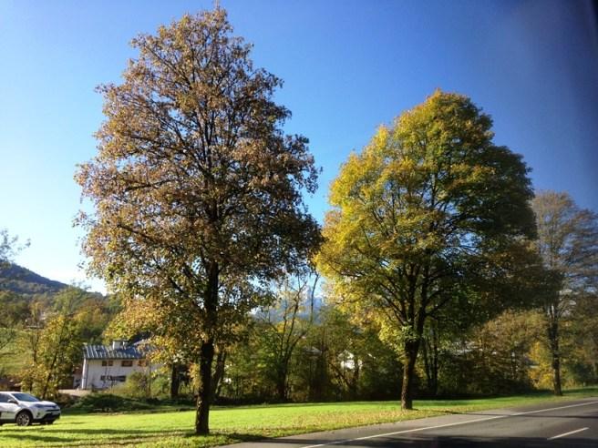 ใบไม้กำลังเริ่มเปลี่ยนสีเลย