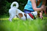 Dogdance © R.Ploder