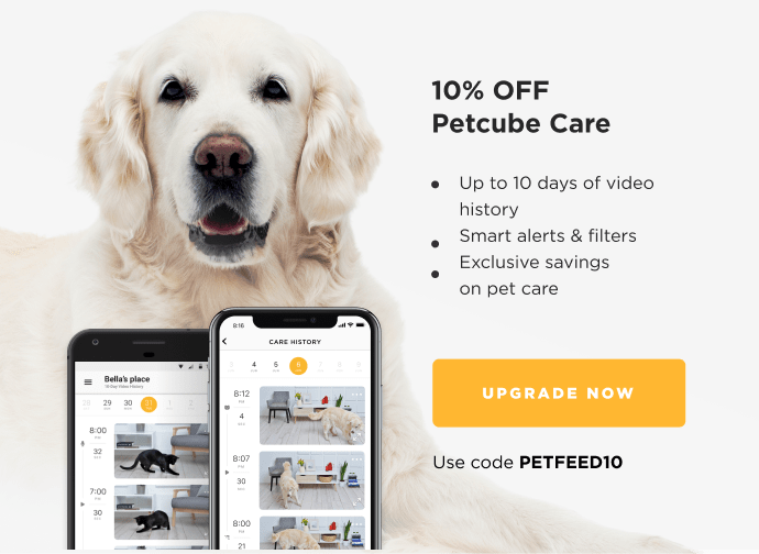 10 Pawesome Pet Moments Caught on Petcube Care