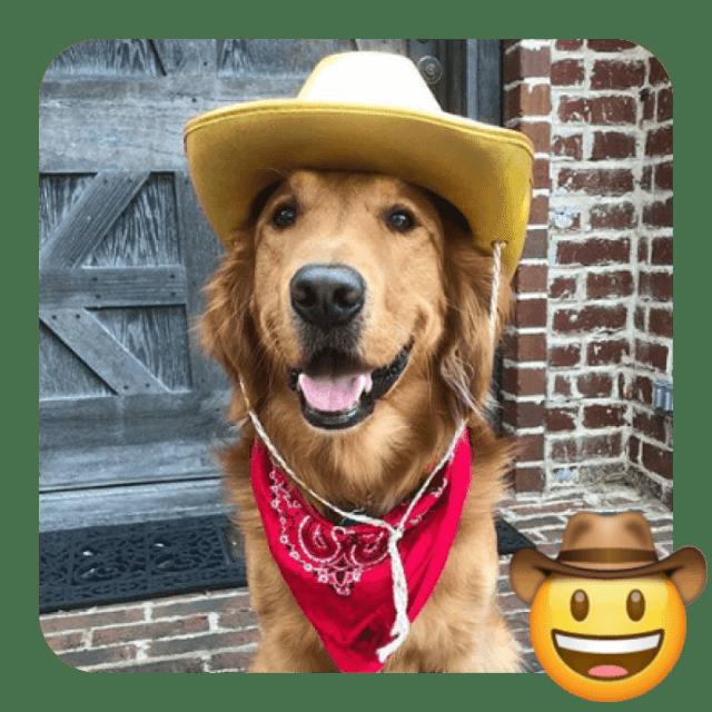 a dog in a cowboy hat
