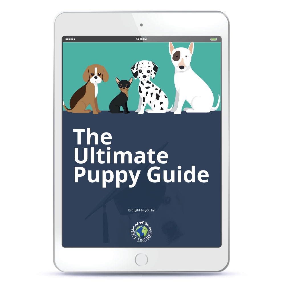 the ultimate puppy guide download