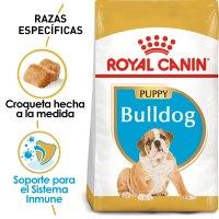 Bulldog_Puppy_Hero_NEW