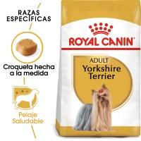 Yorkshire_Terrier_Hero_NEW