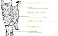 npc-felino-indoor-diagrama