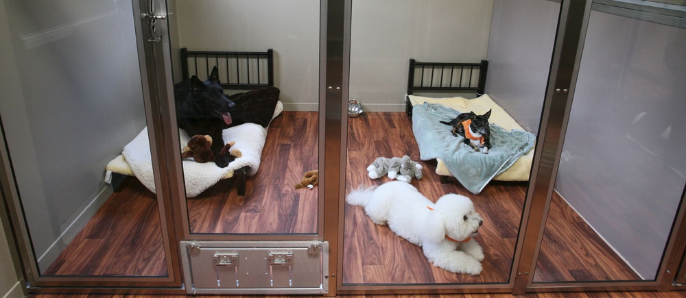 12 Pet Hotels So Luxurious You Ll Wish You Were Sleeping