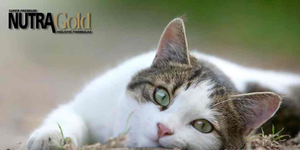 nutra gold gato
