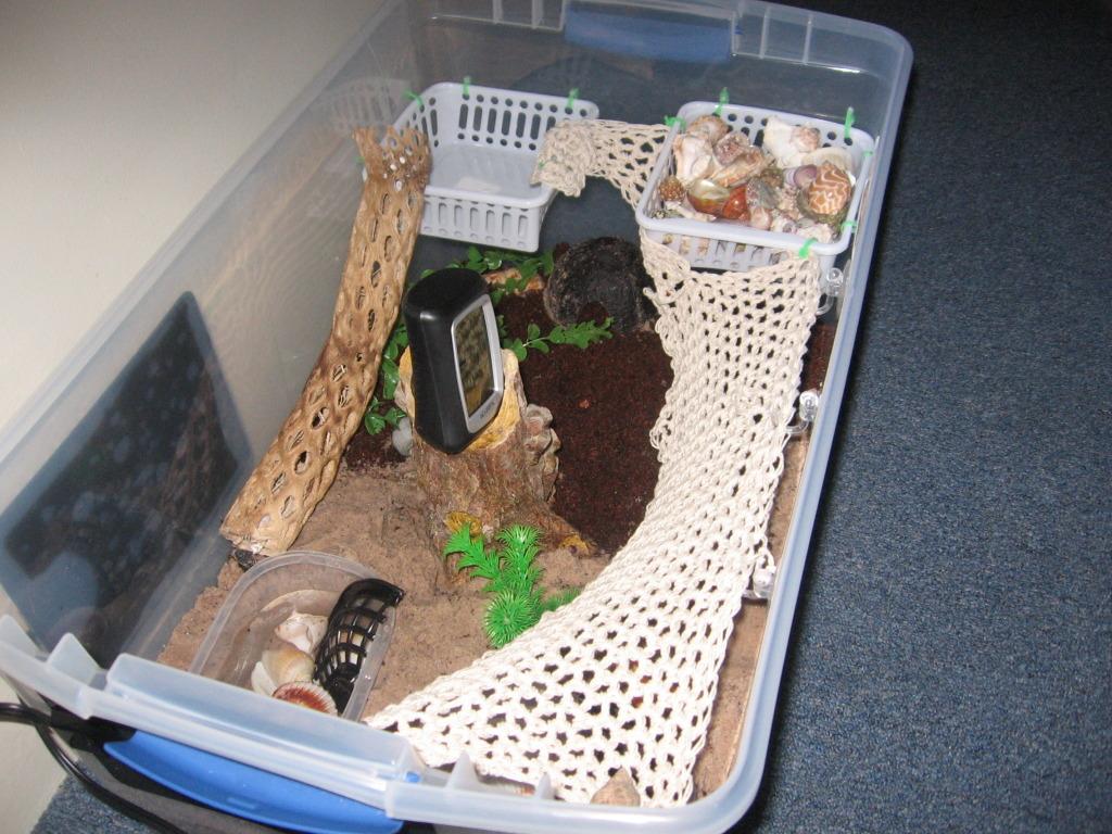 Homemade Tortoise Enclosure