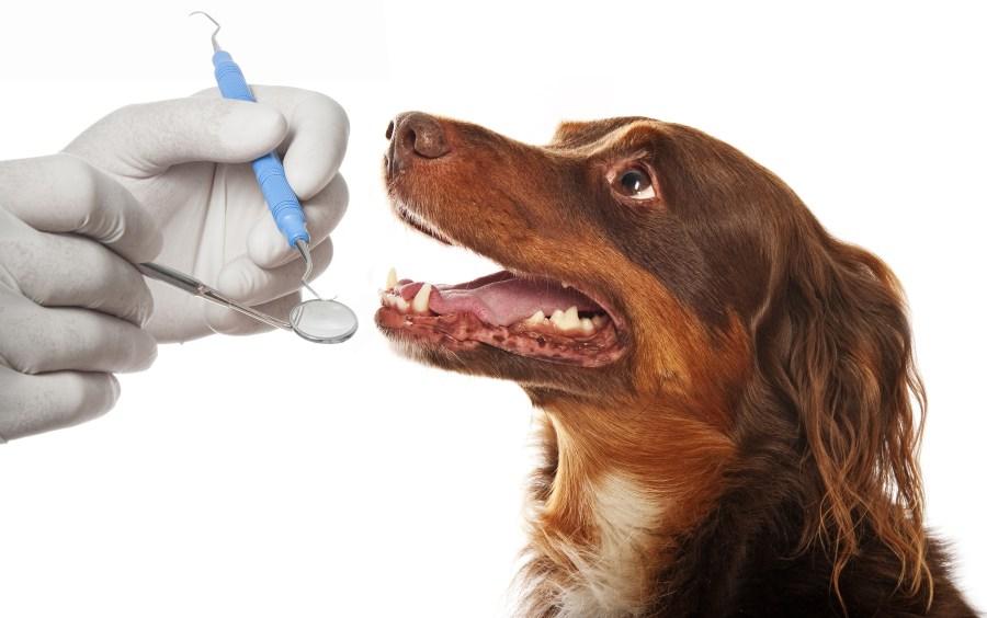 Pet Dental Care in Chandler, AZ