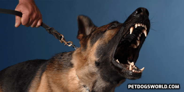 dog anti-bark collars