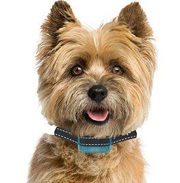 Top 30 Best Bark Collars for Small Dogs, Medium, And Large Dogs 2020 Review