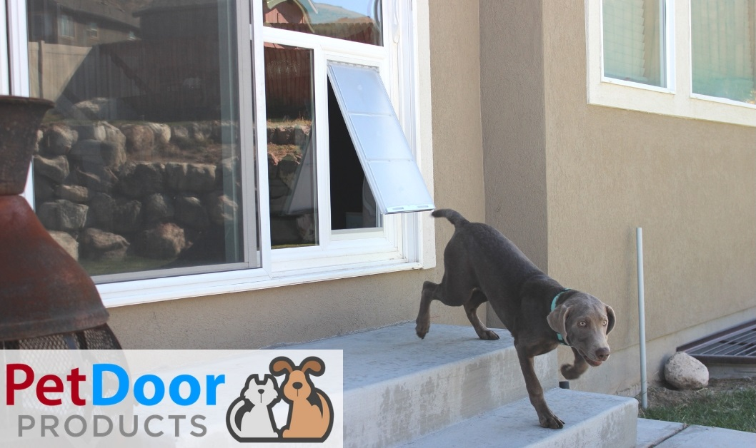 pet doors for extra large dogs dog