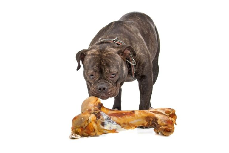 Should I Buy An English Bulldog?