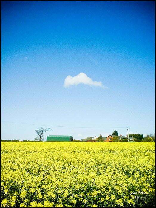 Lonley cloud