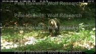 Brown bear_day [PHWR]