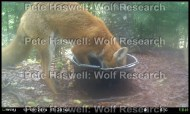 How much food the foxes take from different experimental conditions also gives us an idea of how their foraging and risk perception is affected