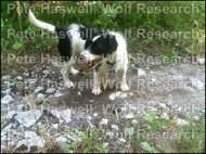 Alf finds a scat sample