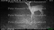 red deer_female [PHWR]