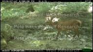 Red deer_water pond (2) [PHWR]