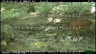 red deer_water pond [PHWR]