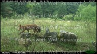 Red fox [PHWR]