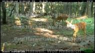 roe deer [PHWR]