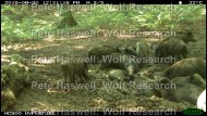 wb_herd [PHWR]